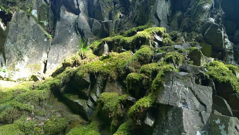 mossy-rocks-reduced